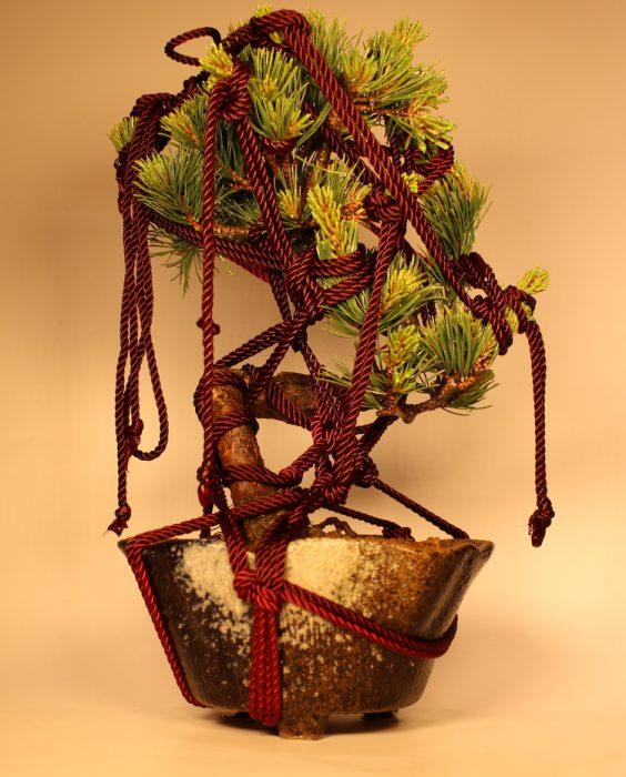 bondage-bonsai